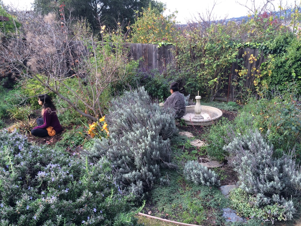 Students doing a plant meditation in the garden during class.