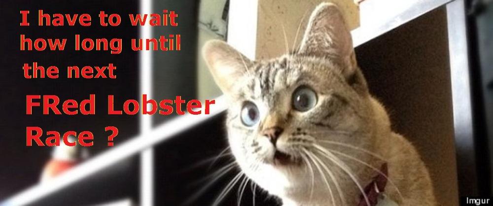 suprise cat.jpg