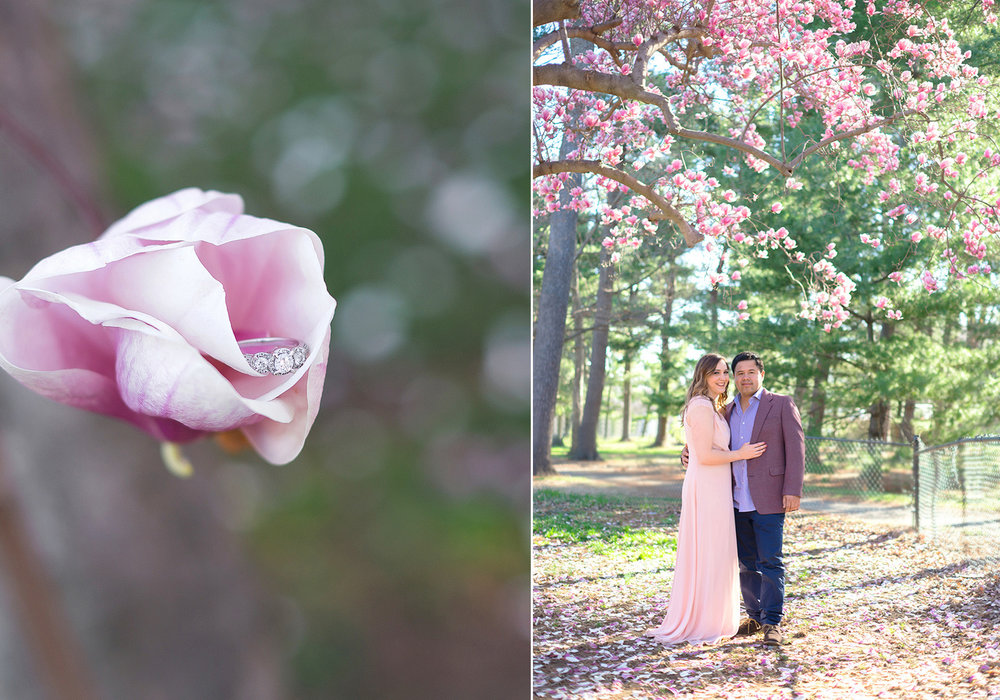 DC wedding photographer cherry blossom engagement photos