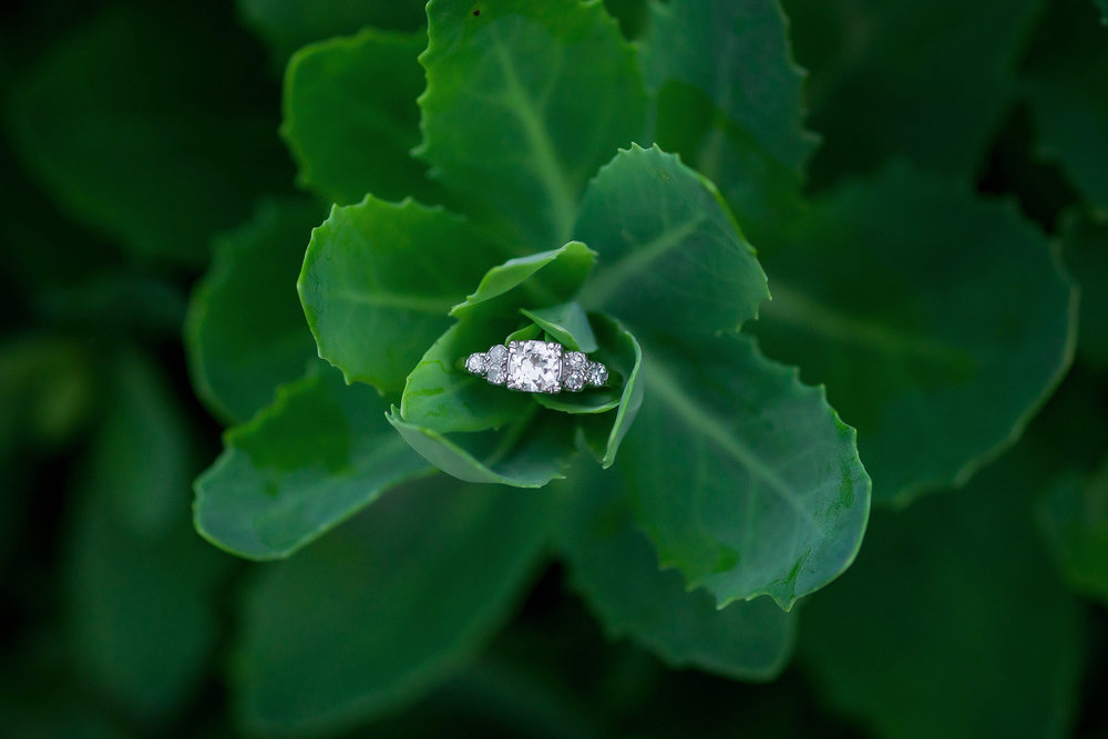 Engagement ring in cactus succulent at Meadowlark Botanicals