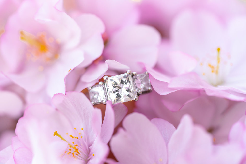 Three stone engagement ring nestled in pink cherry blossoms