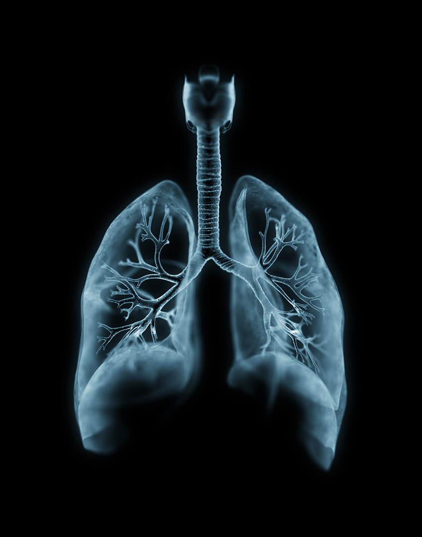 lungs_web.jpg