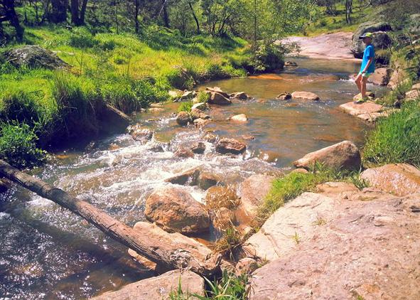 spring creek_01.jpg