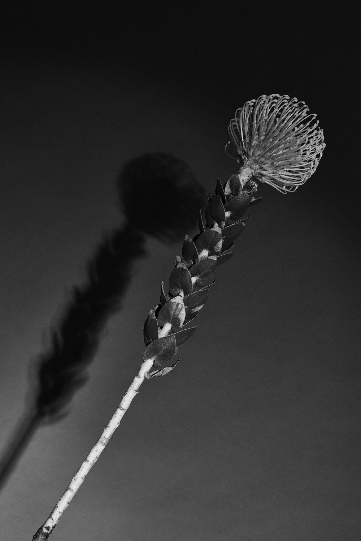 flowers12320.jpg