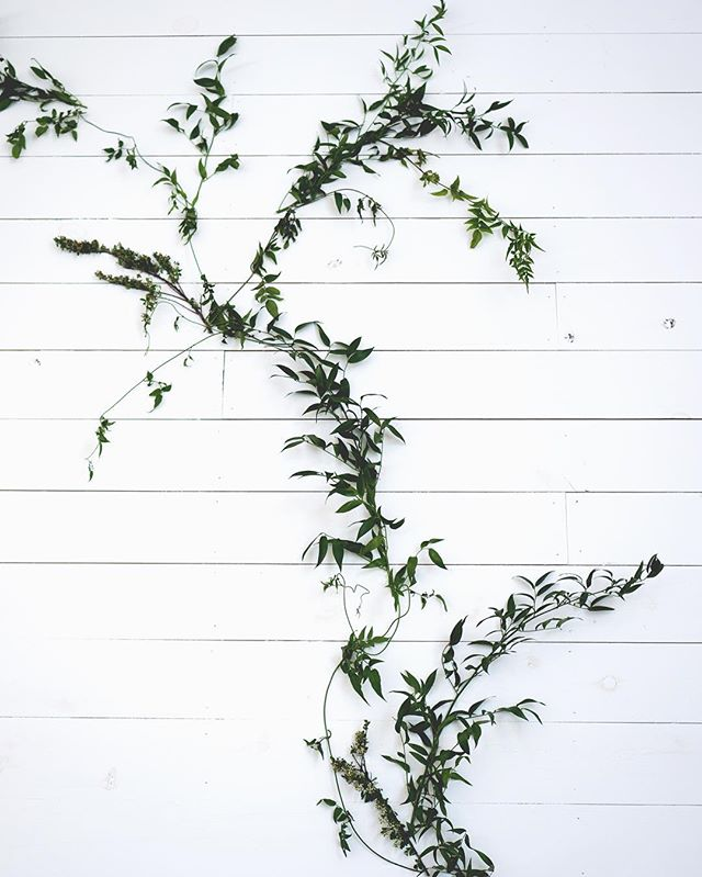 Celebrating simple + raw beauty today! Thanks to our girl @ohlittlefoxes 🌿