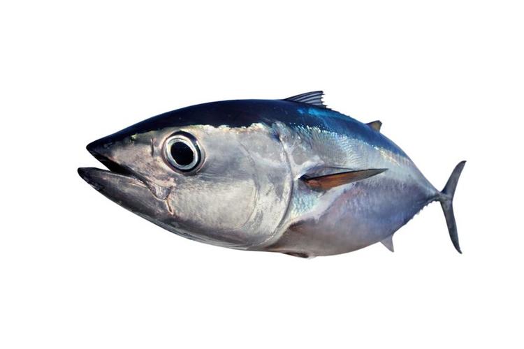 Rödlistade fiskar ska vi inte köpa