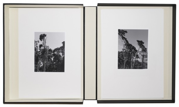 Christina Leithe H.,   Landscape.Albums.  , 2014. Detail.