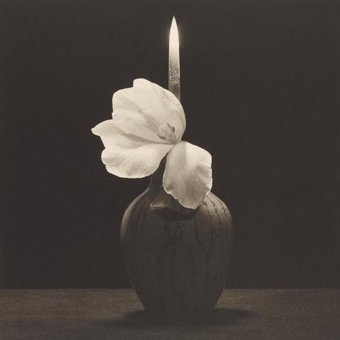 Robert Mapplethorpe,   Flower With Knife  , 1985 Platinum print,   Image: 49.2 × 49.5 cm (19 3/8 × 19 1/2 in.) Jointly acquired by the J. Paul Getty Trust and the Los Angeles County Museum of Art, with funds provided by the J. Paul Getty Trust and the David Geffen Foundation, 2011.7.28 © Robert Mapplethorpe Foundation
