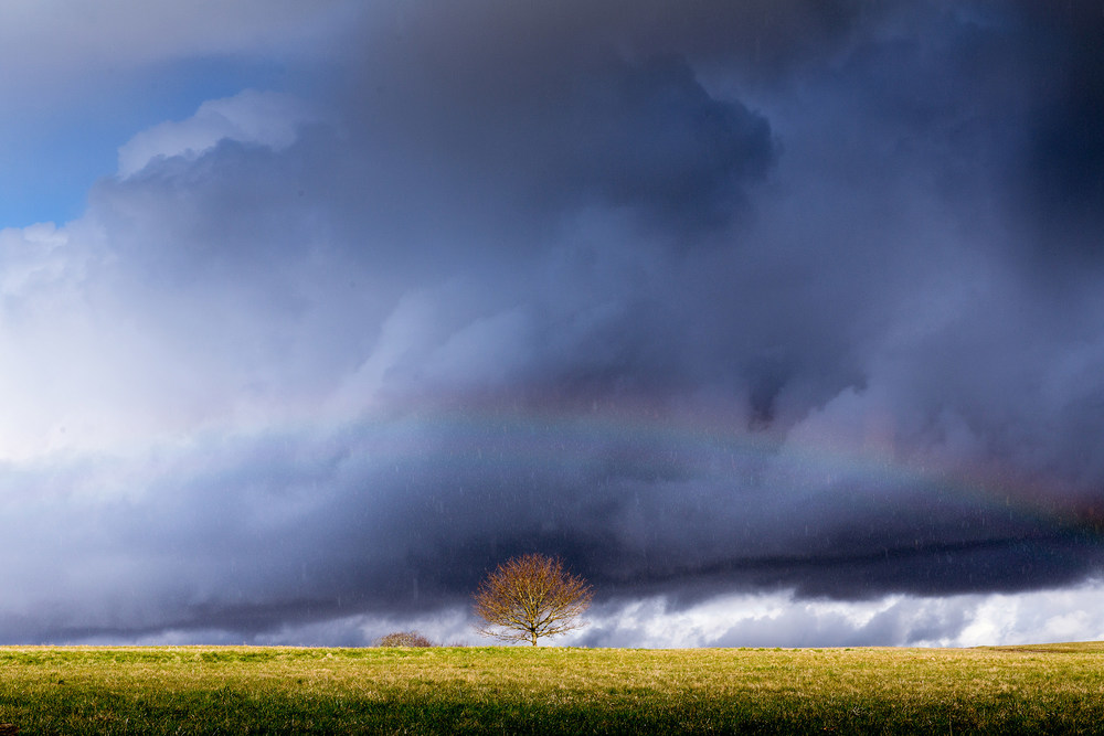 Joe Clarke, Bristol photographer, Ashton Court, rainbow, tree