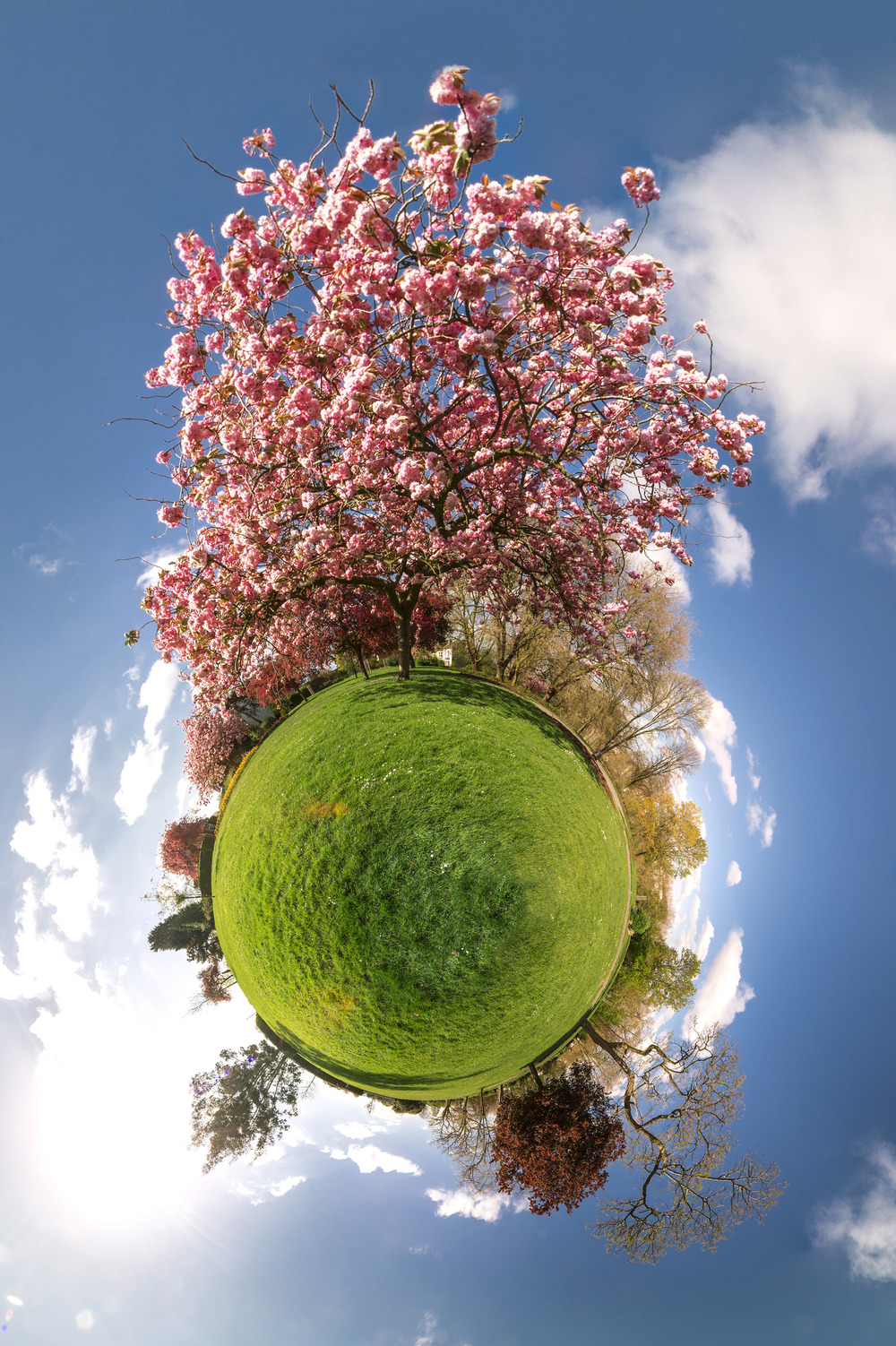stereographic blossom tree