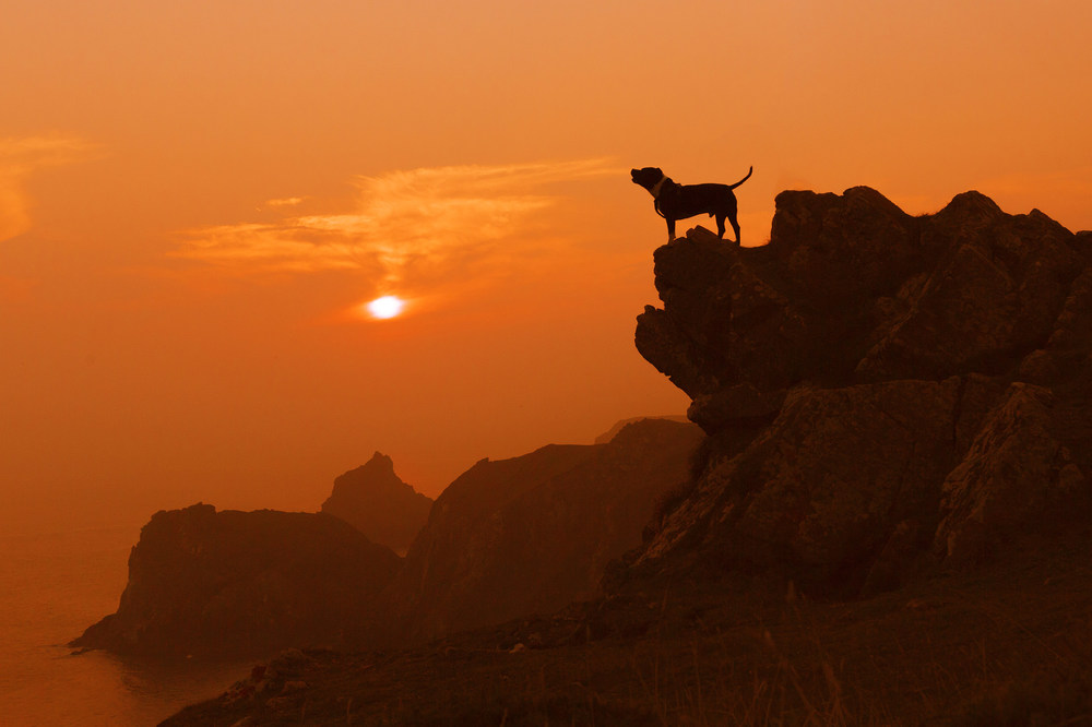 joe clarke, photographer, kynance cove, dog howling on cliff.jpg