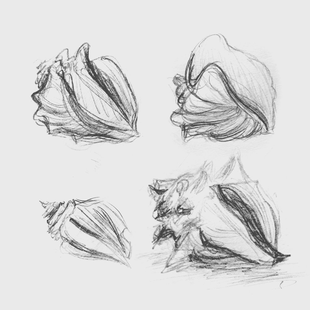 Conch shell study