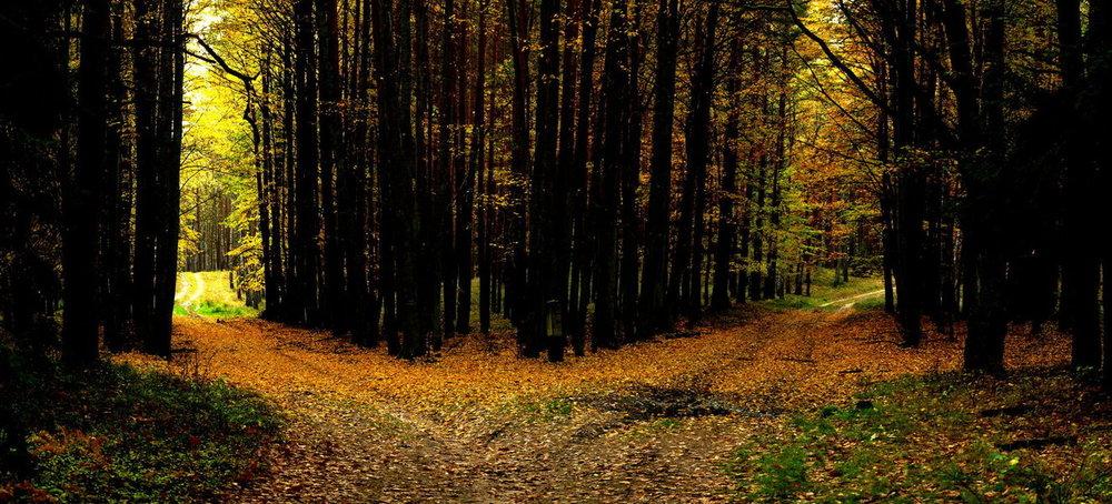 two-roads.jpg