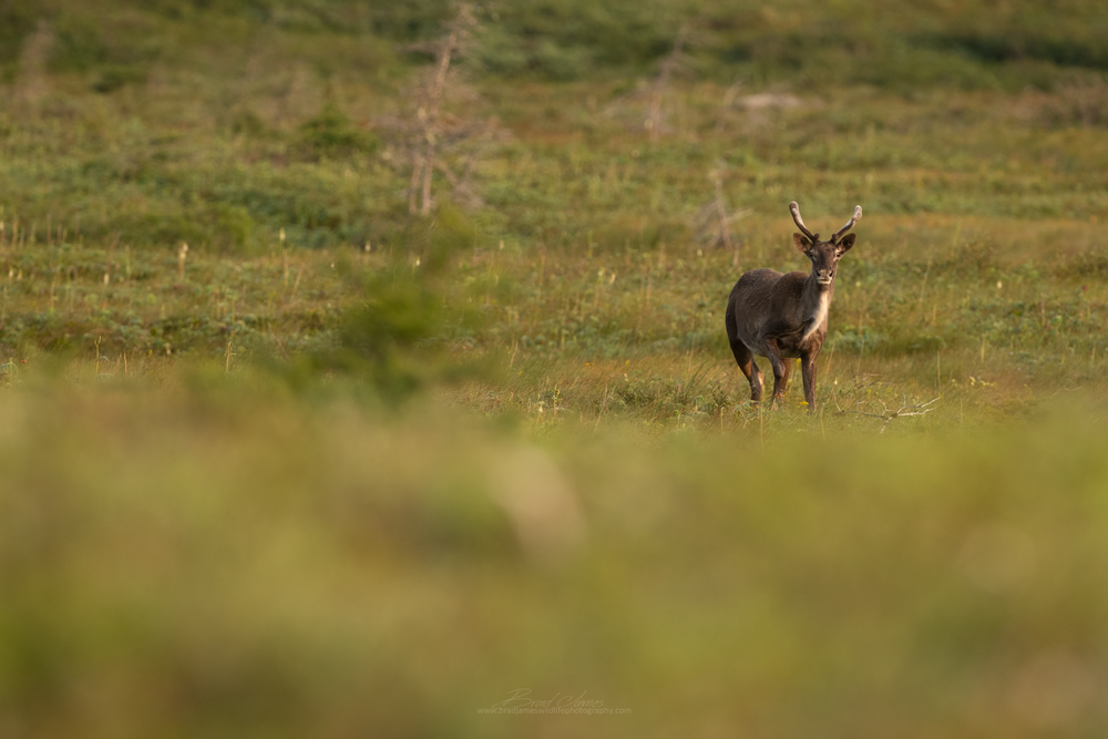2018_Caribou_Aug_10_2048.png