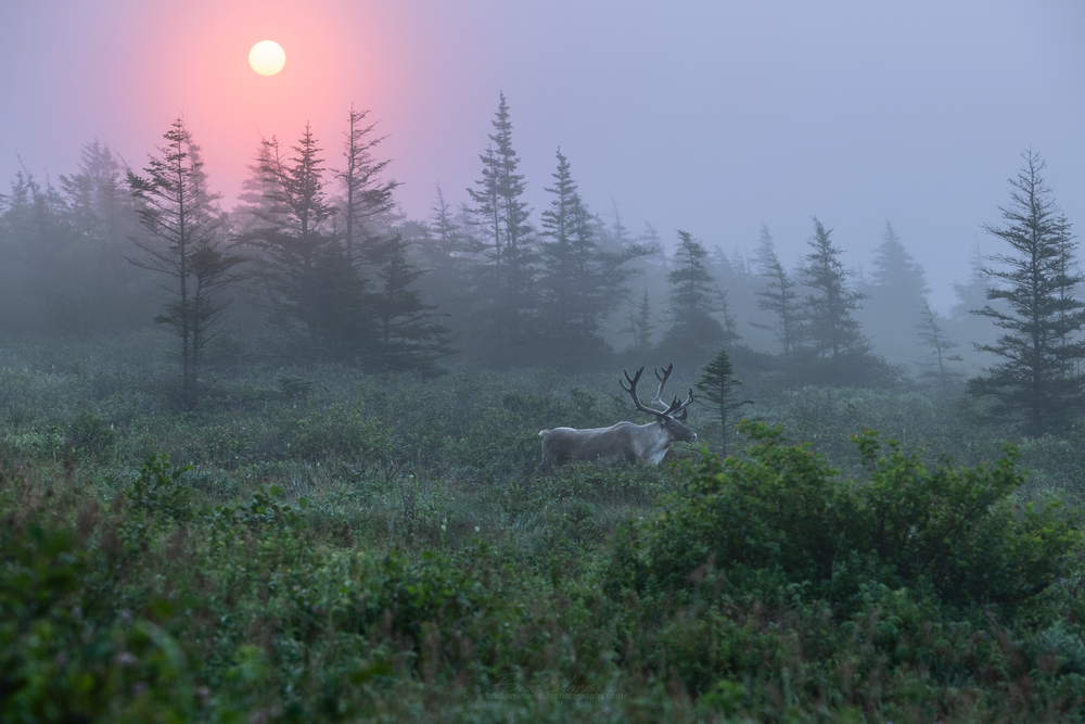2018_Caribou_Aug_2_2048.png