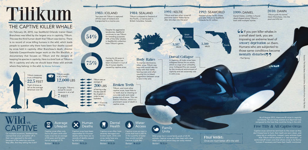 Killer whales in captivity vs wild - photo#27