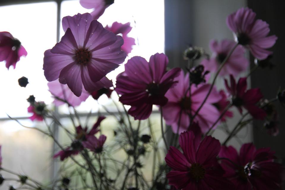 KB_pinkblooms-window-5710.jpg