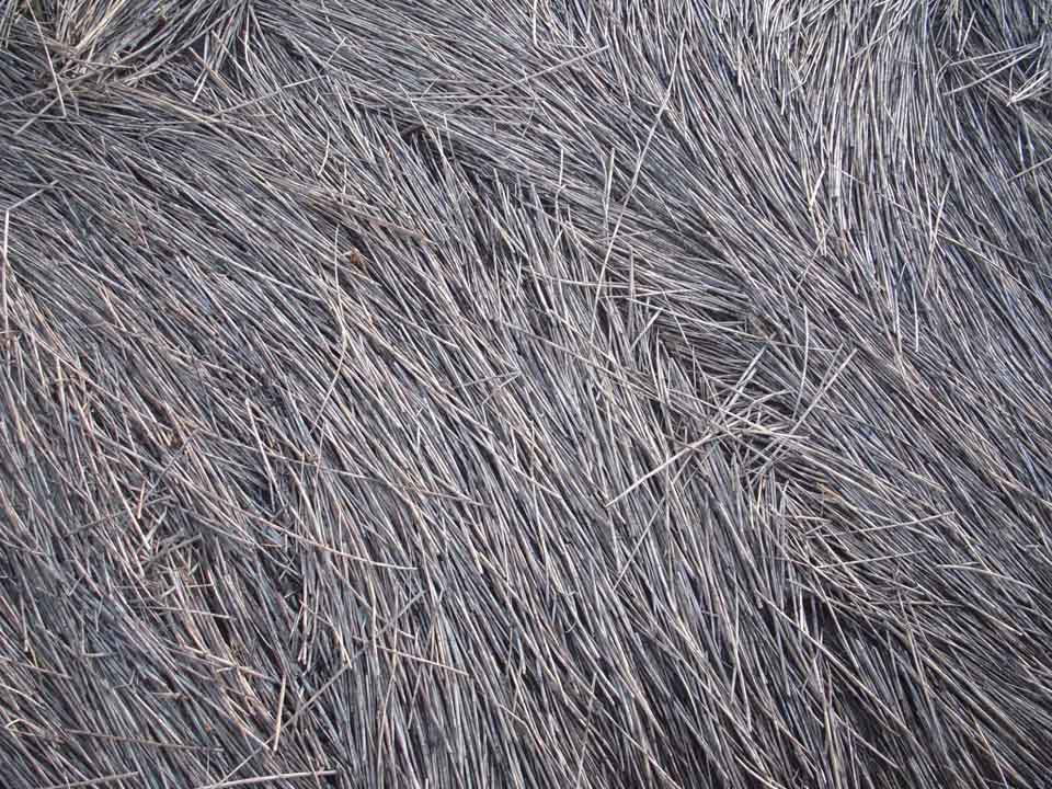 RW_seagrass-8121.JPG