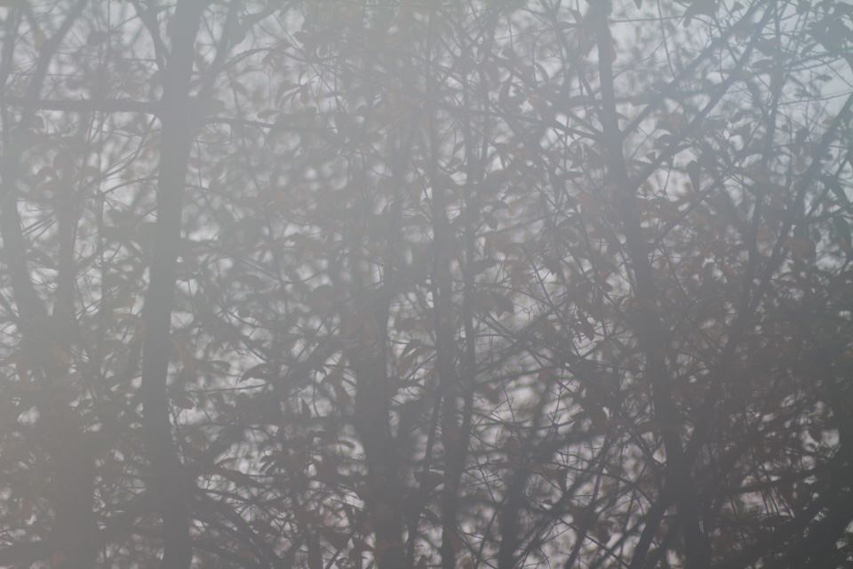 KB_foggymorning-6545.jpg