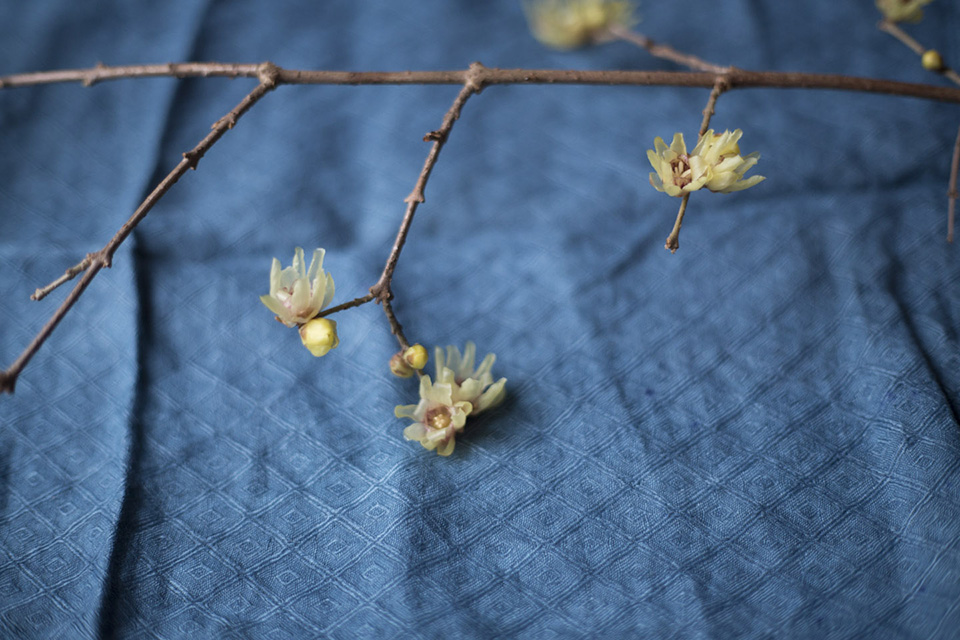early bloomer_wintersweet-0798.jpg