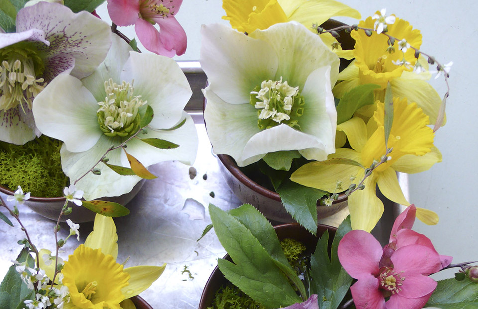 hellebores_daffodils_quince-1000224.jpg