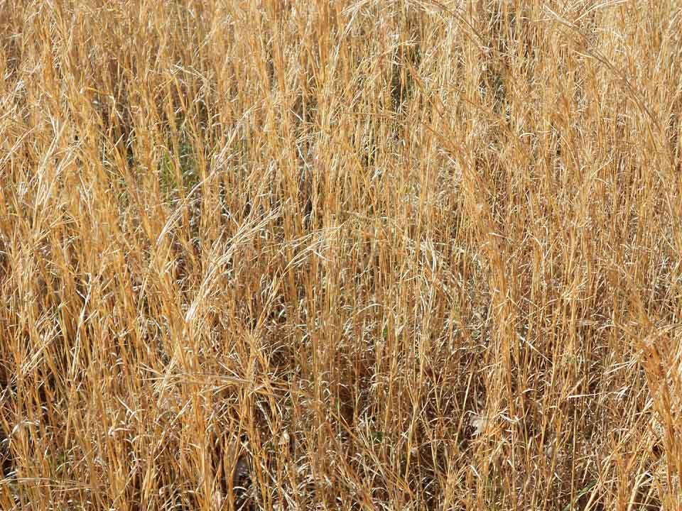RW_glintinggrass-0458.JPG