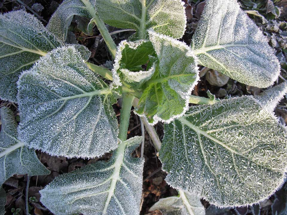 RW_frost+leaves1440.jpg