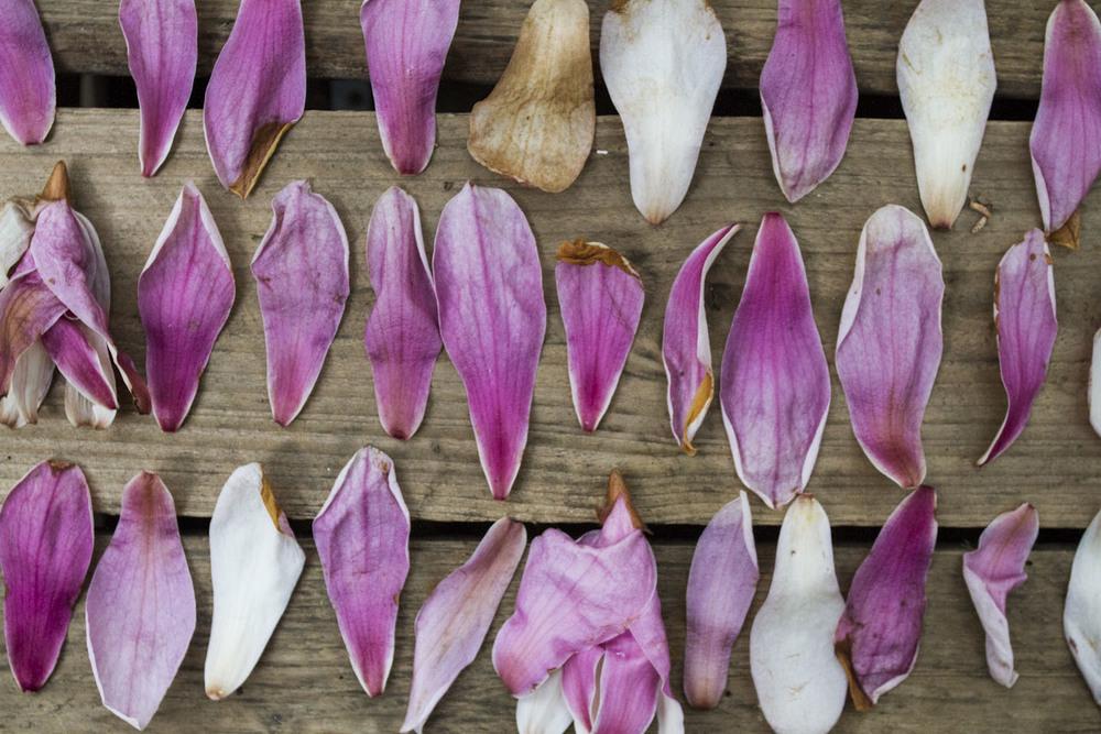 japanese magnolia-2093.jpg