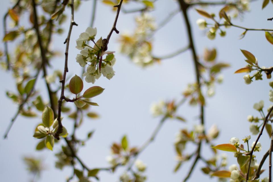 KB_springblossoms-9789.jpg