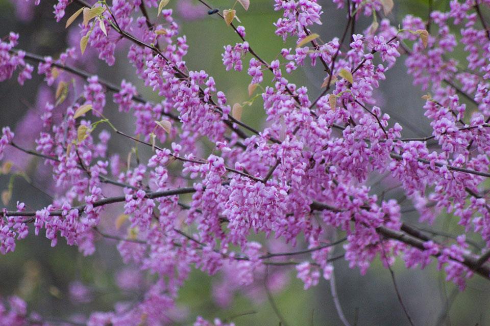KB_purpleblooms-0239.jpg