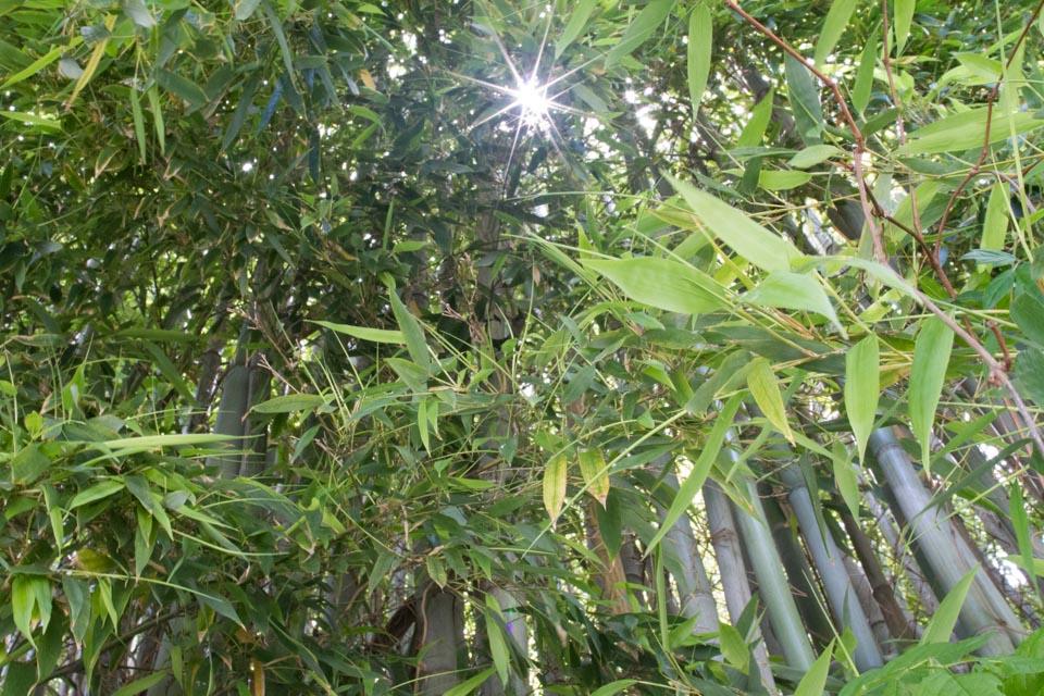 KB_bamboo-2605.jpg