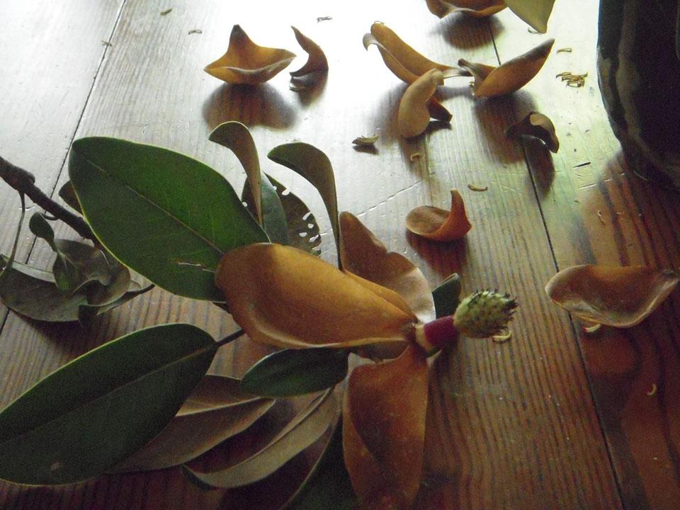RW-aging_magnolias-7896.JPG
