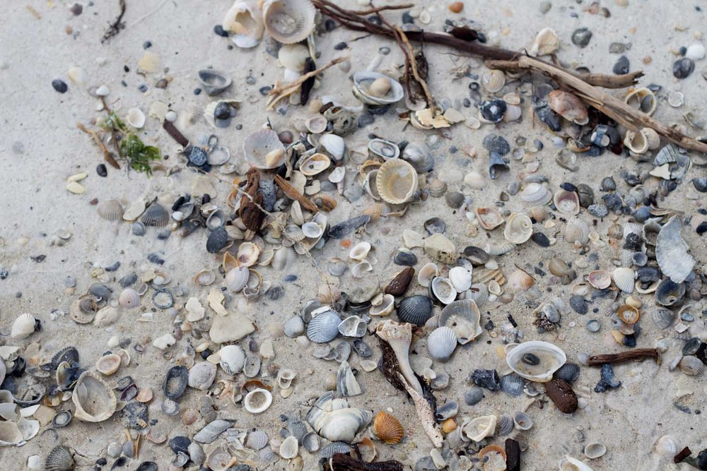 shells and flotsam-2999.jpg