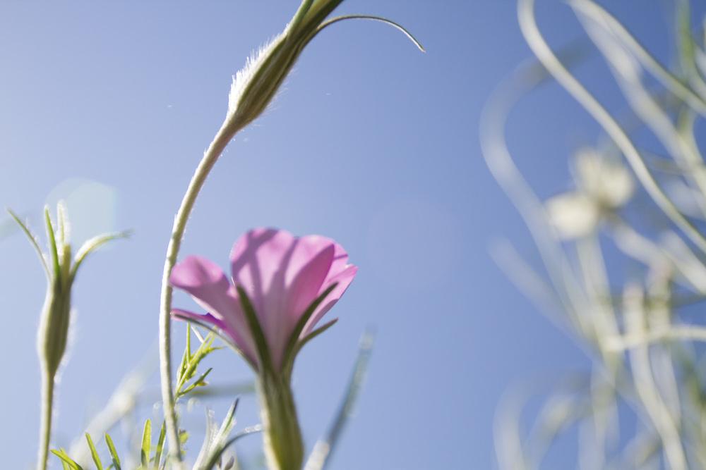 wildflowers-3618.jpg