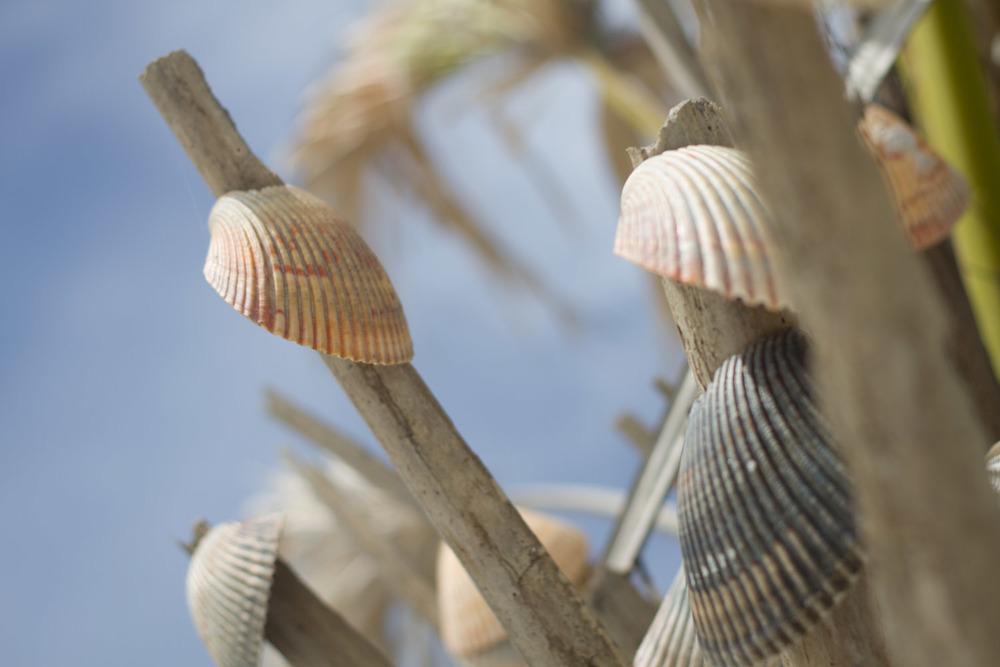 shell_tree-2974.jpg