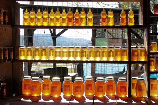 023_ga mountain honey-.jpg
