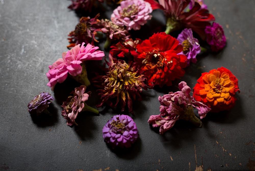 zinnia flowerheads-0419.jpg