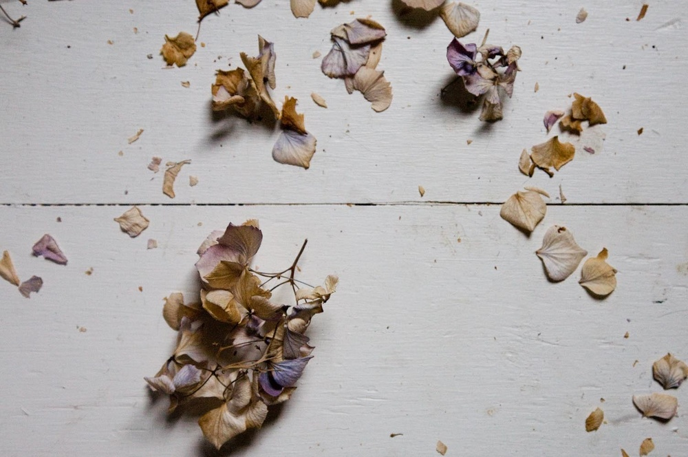 dried_hydrangea-4655.jpg