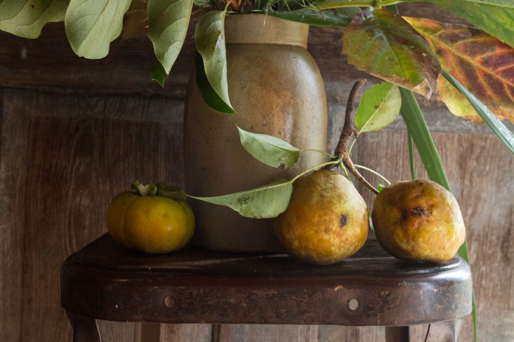 seasonal_bloom_fall fruits and grasses-4463.jpg