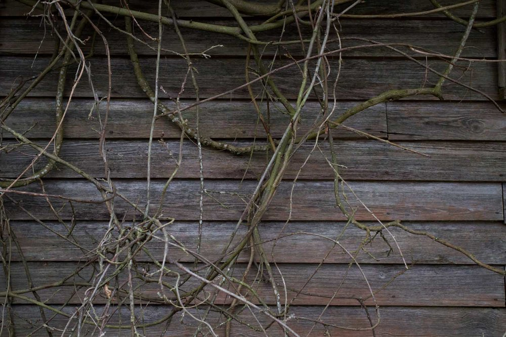 twined vines-1740.jpg