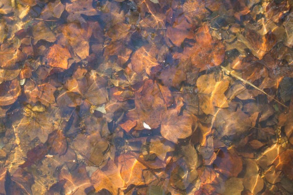 lake water-8041.jpg