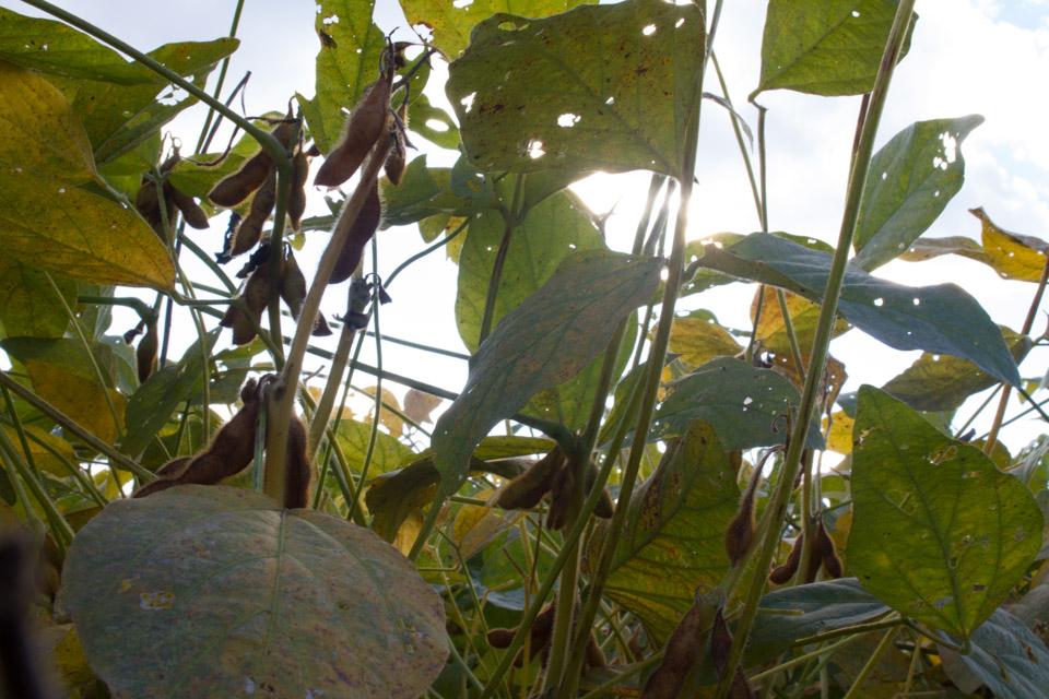 KB_soybeans-1061.jpg