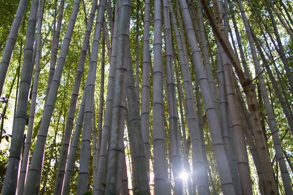 KB_bamboo-2944.jpg