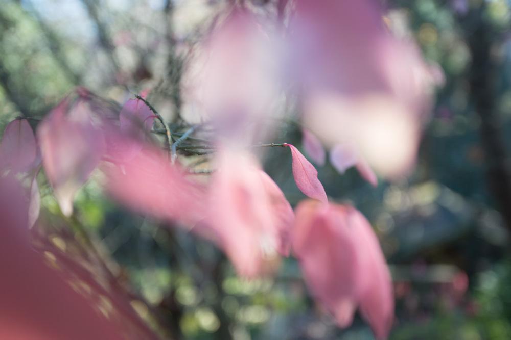 peachy pink-4768.jpg
