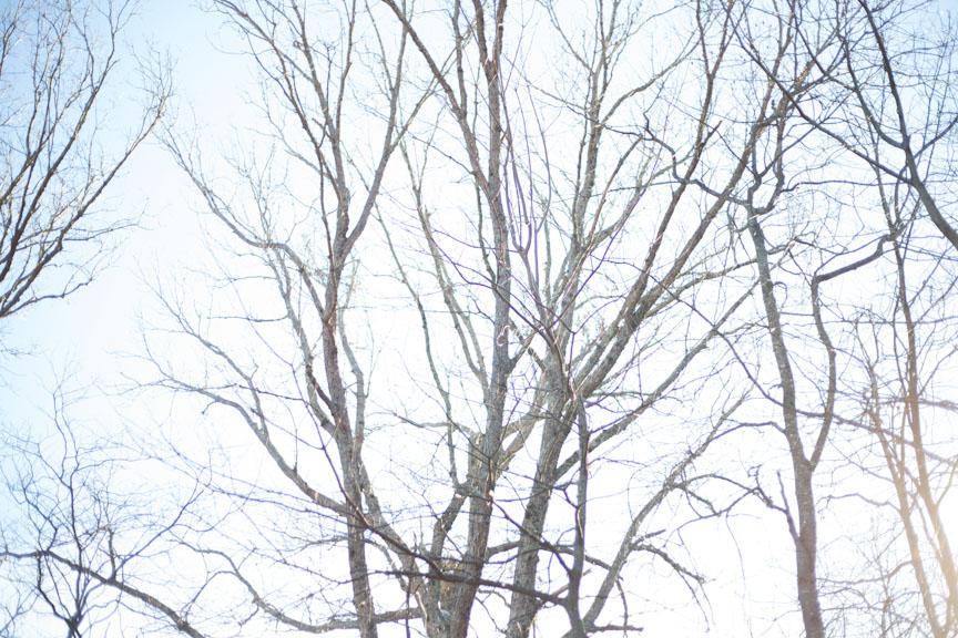 white branches-0396.jpg