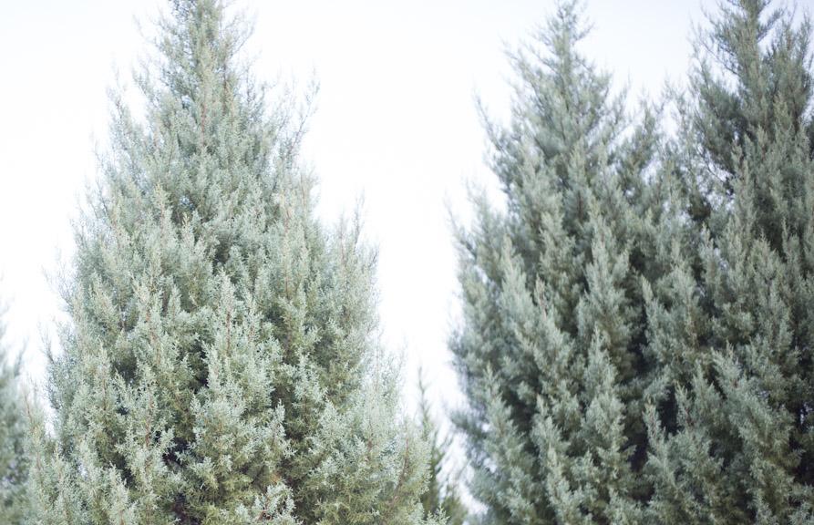 evergreens-0163.jpg