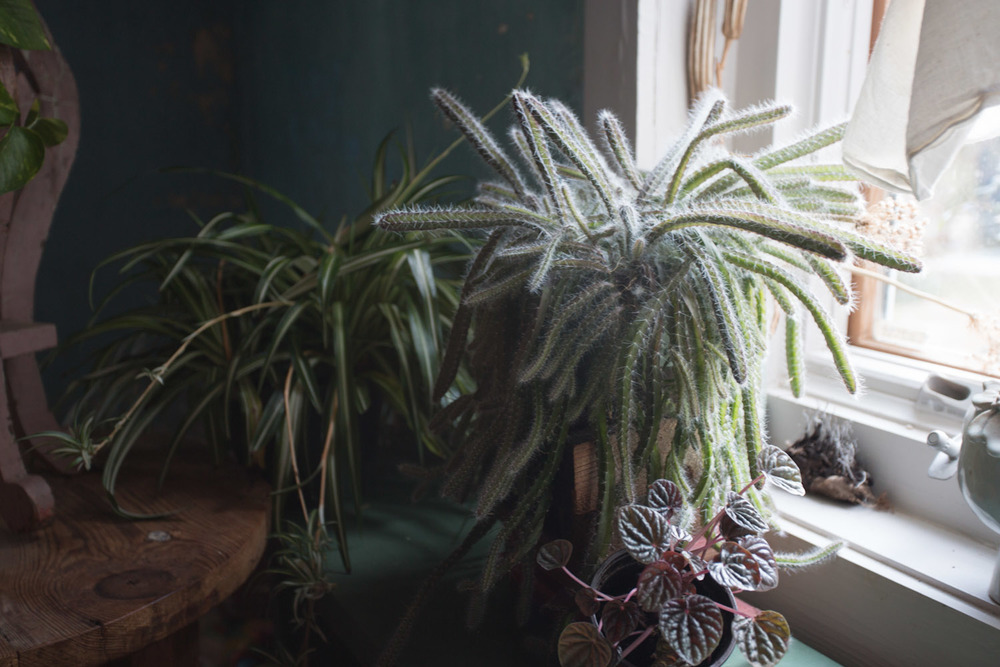 indoor_plants-6065.jpg