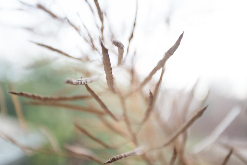 collard seeds-6735.jpg