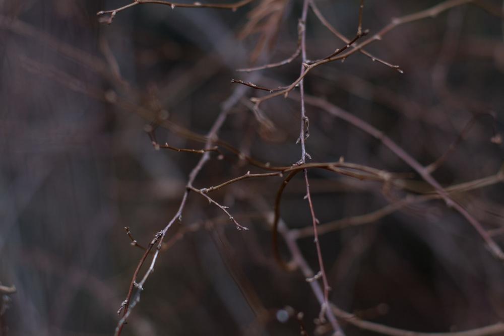 spirea branches-9833.jpg