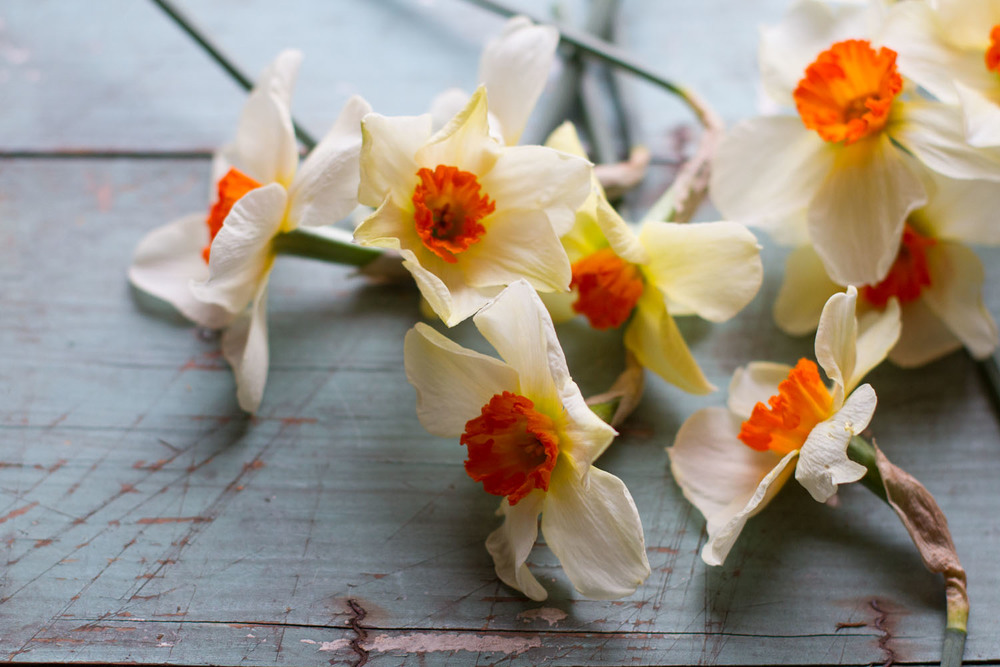 first_daffodils-0149.jpg